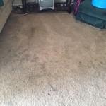 Tinley-Park-Dirty-Carpet