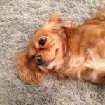 Tinley-Park-Dog-Poop-Cleaning