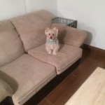 Tinley-Park-Sofa-Pet-Stain-Cleaning